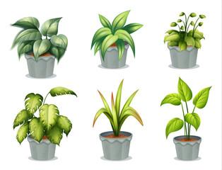 Six leafy plants with pot