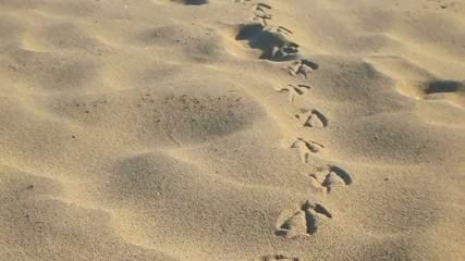 Traccia impronte gabbiano
