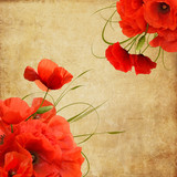 Vintage poppies composition with space for text