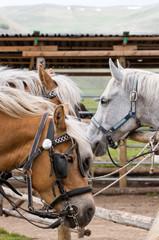horses waiting