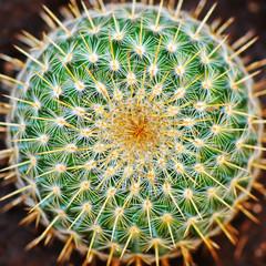 Around mammilaria cactus (top view)