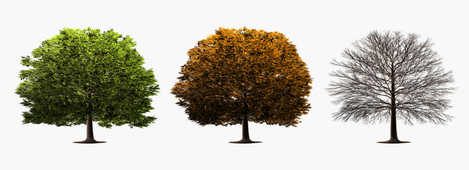 three trees on white background, different seasons