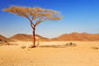 Leinwanddruck Bild - Idyllic desert scenery with single tree, Egypt