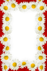 Daisies and red ribbon frame