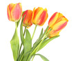 Beautiful orange tulips isolated on white