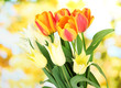 Beautiful white and orange tulips on bright background