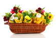 Beautiful spring flowers in basket isolated on white