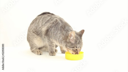 Cat having milk