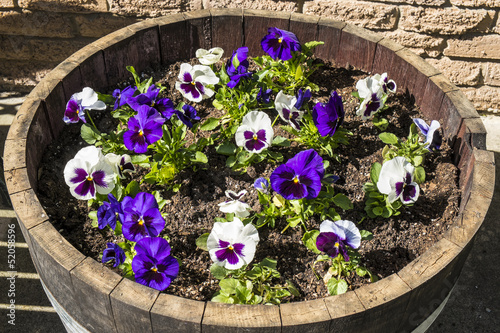 Wine Barrel Filled with Pansies
