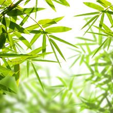 des feuilles de bambou isolé sur un fond blanc