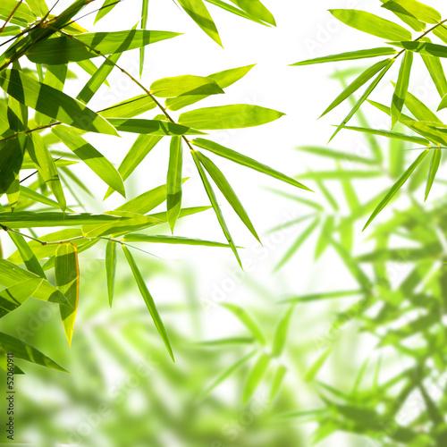 liscie-bambusa-na-bialym-tle-na-bialym-tle