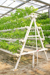 Stereo planting celery in modern agricultural production worksho
