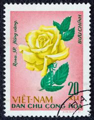 Yellow rose (Vietnam 1968)