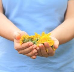 Mani con fiori di tarassaco