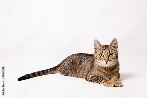 cat on the bright background