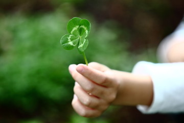 Four-Leaved Clover in a Child´s Hand