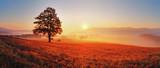 Fototapety Tree and sun