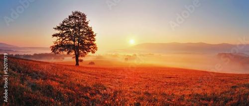 Tree and sun - 52071979