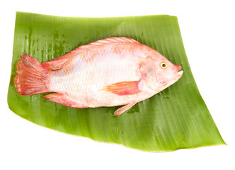 fresh mango fish isolated on white background