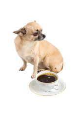 Dog with a Cup of coffee