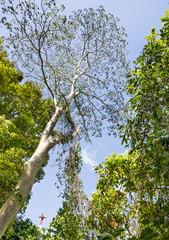 Tree towards the Sky