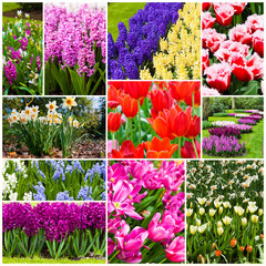 flowers collage.  Beautiful spring flowers