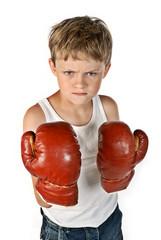 Kleiner Boxer