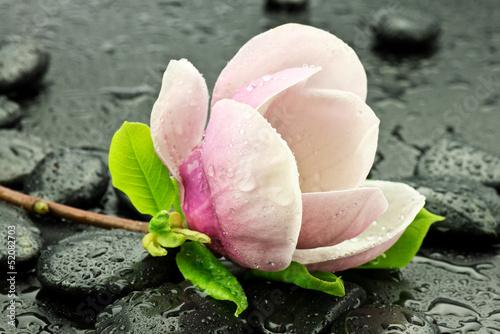 Fotobehang Magnolia Magnolia z kamieniami do spa