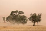 Sand storm, Kalahari desert