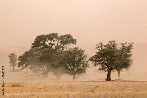 Fotobehang Zuid Afrika Sand storm, Kalahari desert