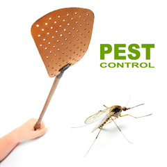 Flyswatter and mosquito. Ecological pest control.