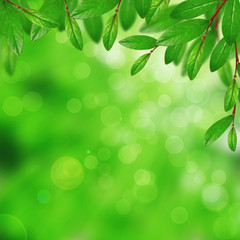 Tree leaves on the blurred background