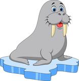 Fototapety Cute walrus on ice