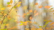 Autumn leaves outdoors. Blurred motion