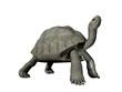 Galapagos tortoise - 3D render