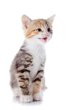 Multi-colored mewing kitten. poster