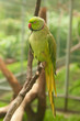 green parrot with red beak