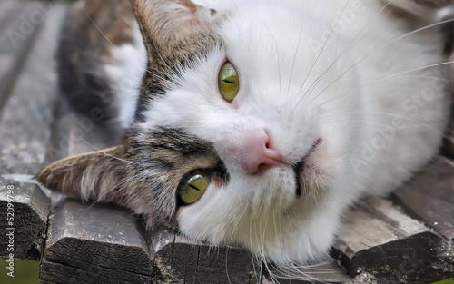 portrait d'un chat sur un banc
