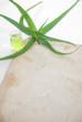 houseplant aloe