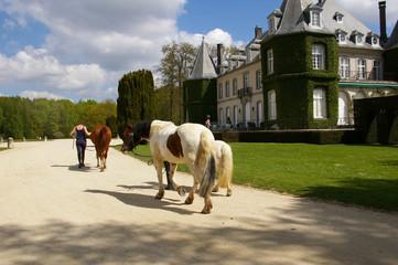 Chevaux au château.