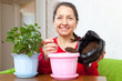 woman transplants  Kalanchoe  in flowerpot