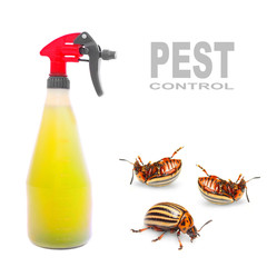 Plastic sprayer with insecticide and The Potato Beetle.