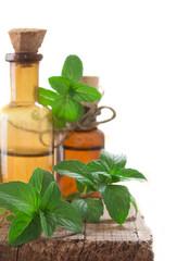fresh mint oil in the bottles