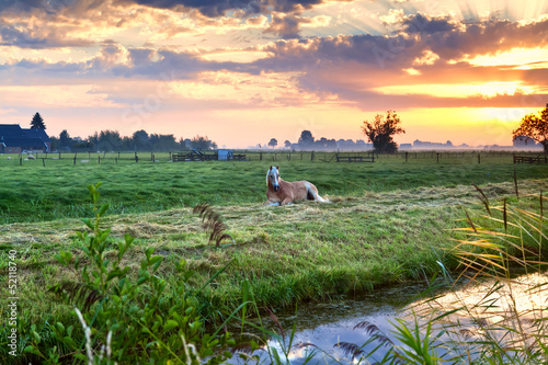horse relaxed on pasture at sunrise