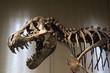 canvas print picture - Tyrannosaurus Rex skeleton