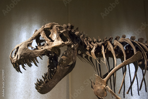canvas print picture Tyrannosaurus Rex skeleton