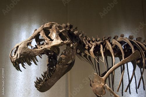 Zdjęcia Tyrannosaurus Rex skeleton