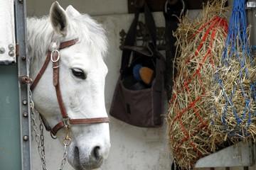 cavallo nel trailer