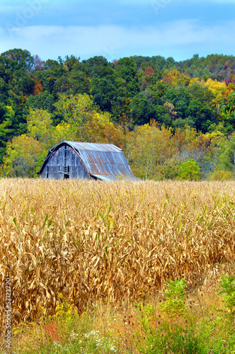 Barn and Cornfield