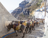 donkeys at the port of Fira in Santorini, Greece